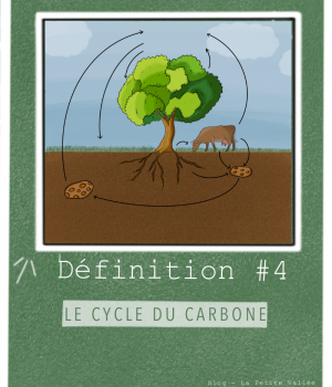Définition cycle du carbone