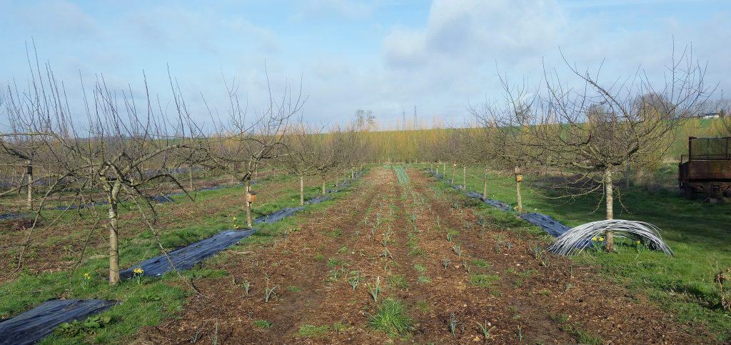 Verger-maraîcher l'hiver microferme Rufaux bio diversifié agrofresterie