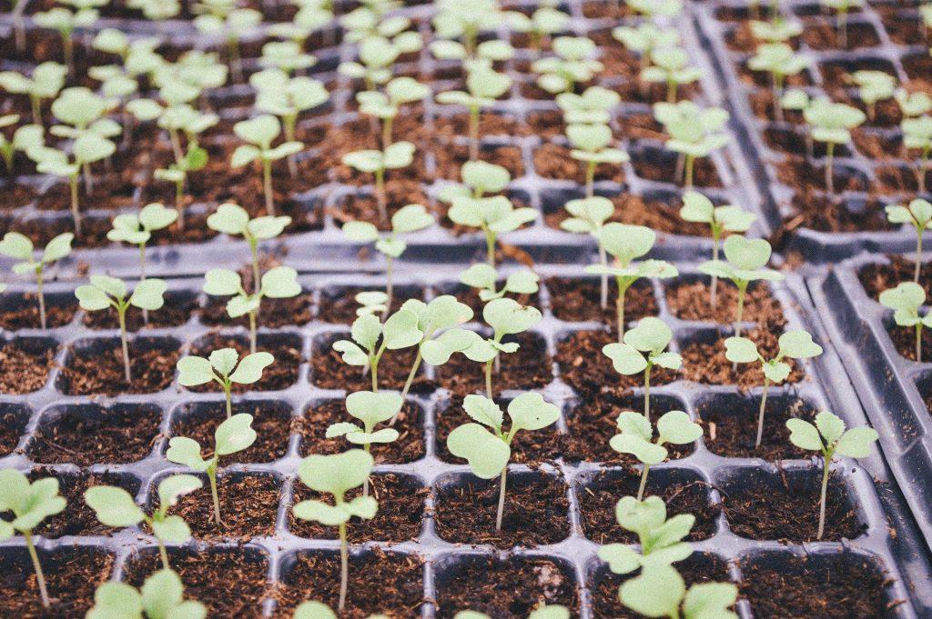 Plateaux de semis sur table chauffante autoconstruction fabrication