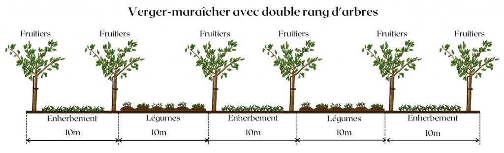 Exemple d'une conception de verger-maraîcher avec double rang d'arbres fruitiers (Ferme de la Durette)