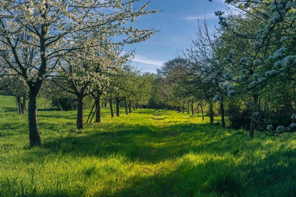 Conception Verger-maraîcher arboriculture arbres maraichage
